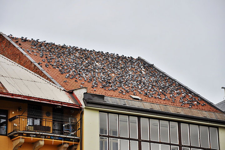 A2B Pest Control are able to install spikes to deter birds from roofs in Northwood.