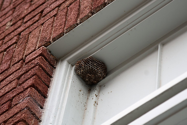We provide a wasp nest removal service for domestic and commercial properties in Northwood.